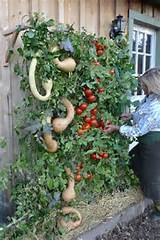 Vertical Gardening Tips | Sustain | Pinterest