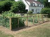 ... Fences Design, Gardens Fences, Chicken Coops, Gardens Idea, Vegetables