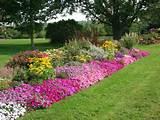 free perennial garden designs