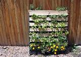 Pallet Vertical Garden - 16 Do It Yourself Ideas | Wooden Pallet ...
