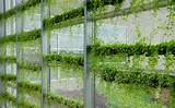 Growing Plants Vertically and Hydroponically