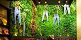 ... of plants in a store with jeans hanging from Vertical Hydro Garden