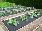 tidy weed free gardens pinterest