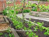 Garden Design - designer vegetable garden layout ideas beginners ideas