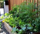 veggie garden ideas | Gardening | Pinterest