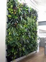 Cómo cuidar un jardín vertical