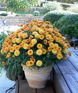 fall color garden beauty and ideas pinterest