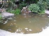 Raised Brick Pond