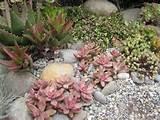 Some photos of my succulent rock garden.