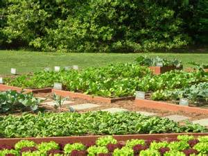 ... backyard vegetable garden ideas backyard vegetable garden ideas