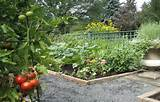 Edge Walls Raised Vegetable Garden Beds With Gravel Paths, raised ...