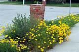 Mailbox Landscaping | Mailbox Garden Ideas