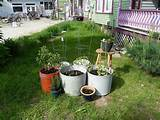 gardening idea vegetable container garden