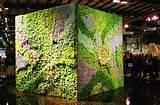 succulent vertical wall garden show ideas pinterest