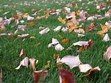 ... Late Fall, Early Winter Pests | Landscaping | Landscape Care & Ideas