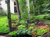 woodland landscaping ideas img 3757 2 jpg