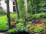 woodland landscaping ideas | IMG_3757-2.jpg