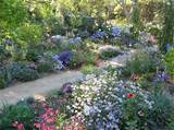 cottage garden design garden idea