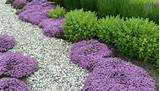 landscaping ideas spring bloom mid spring late spring summer