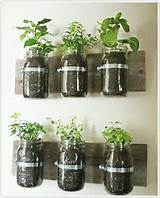 winter indoor herb garden good ideas pinterest