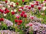 spring bulbs summer bulbs fall fulbs landscaping design garden