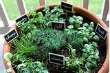 Potted herb garden garden | Ideas for my garden/patio | Pinterest