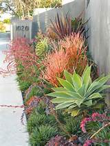 Modern Drought Tolerant (Xeriscape) Garden Even the desert is far from ...