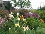 iris garden garden ideas inspiration pinterest