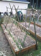 gardens ideas secret gardens free peas peas trele dig dirt creative ...