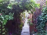 wall gardening