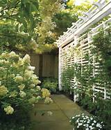 garden trellis ideas pictures design homemade garden trellis ideas
