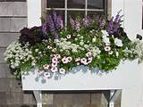 flower box gardening ideas pinterest