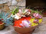 Succulent Container Garden Ideas | CDxND.com - Home Design in Pictures