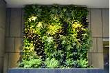Plants On Walls vertical garden systems vertical gardening ...