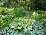 ... Gardens Ideas, Hardwood Mulch, Shady Gardens, Woodland Gardens, Day