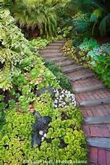 Pin by Jenette Champagne on Gardening | Pinterest
