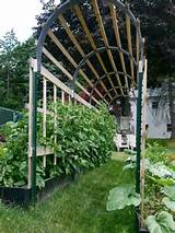 Tomato Trellis Idea #5 – Beautiful Trellis Archway