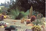 style garden with cactus and grass tree xanthorrhoea using rock