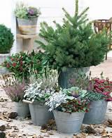 winter komt eraan zorg ervoor dat je tuin er in de herfst en winter