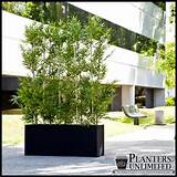 ... Outdoor Plants Trees, Fake Bamboo Balcony Ideas, Balcony Ideas Privacy
