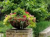 duftpflanzen im garten auch im vorgarten werden die petunien