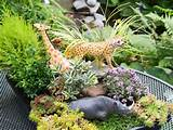 create a miniature garden for kids gardening for kids hgtv gardens