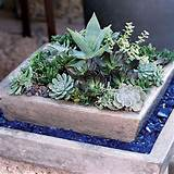 mixed succulent container garden diy gardening pinterest