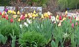 perennial flower garden zone 5 landscaping gardening ideas