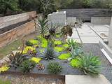 cactus landscaping idea page 2 xeric world forums minimalist cactus