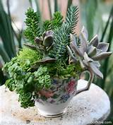 Garden Ideas With Succulents | Here are some ideas for Succulents ...