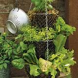 hanging salad garden great for a patio or balcony by bettye
