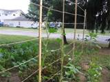 trellis idea | Gardening & outdoor ideas | Pinterest