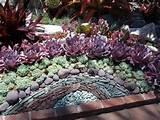 Cactus & Succulent Rock Garden Design at Sherman Gardens, Corona del ...