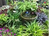 shady garden corner shade loving plants pinterest garden nook